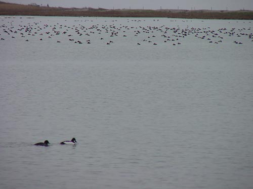 Bøjden Nor den 25. december 2000
